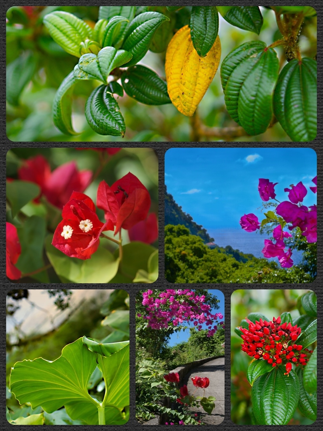 Plants In The Tropical Rainforest Collage flowers – Page 2 –...