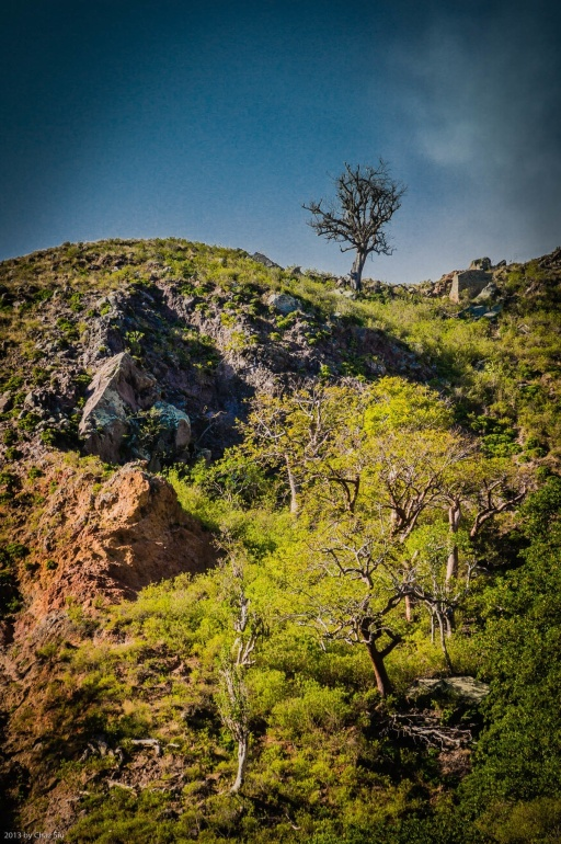 One Tree Stands Alone, Saba, Dutch Caribbean