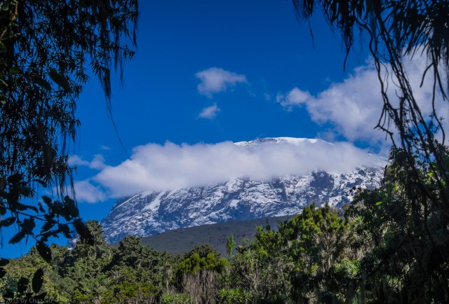 A Final Glimpse Of Kili From The Rainforest