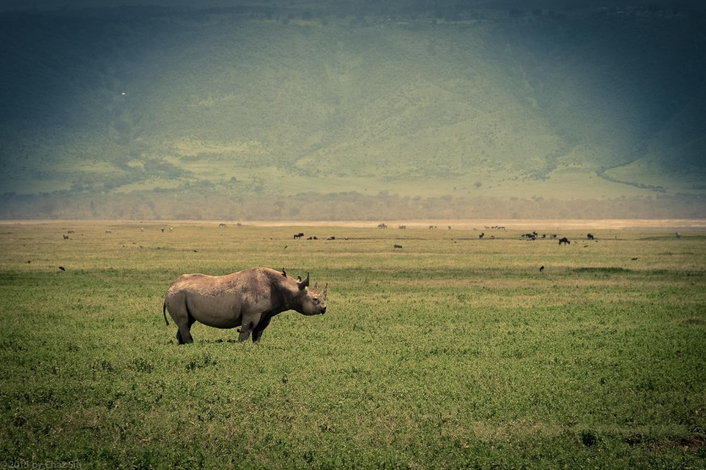 Rare Black Rhino On The Plains