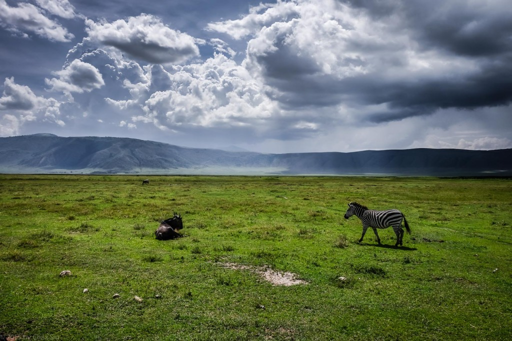 Rainclouds and Sunbeams With Zebra and Wildbeest