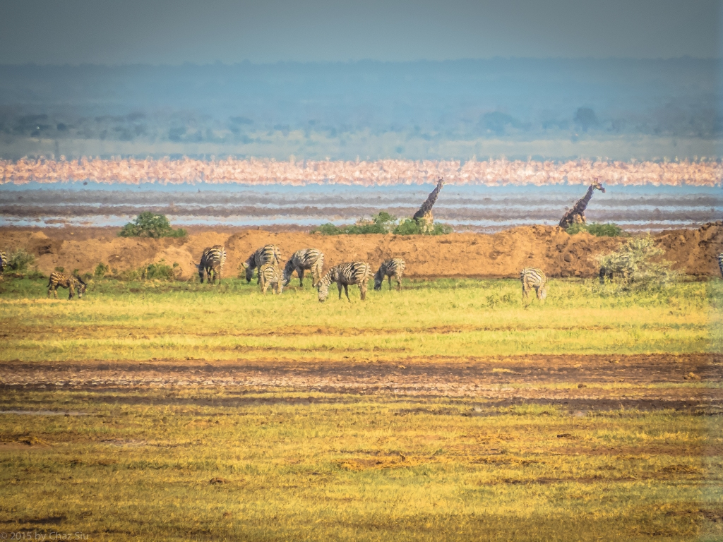 Flamingos, Giraffes, Zebra - Lake Manyara