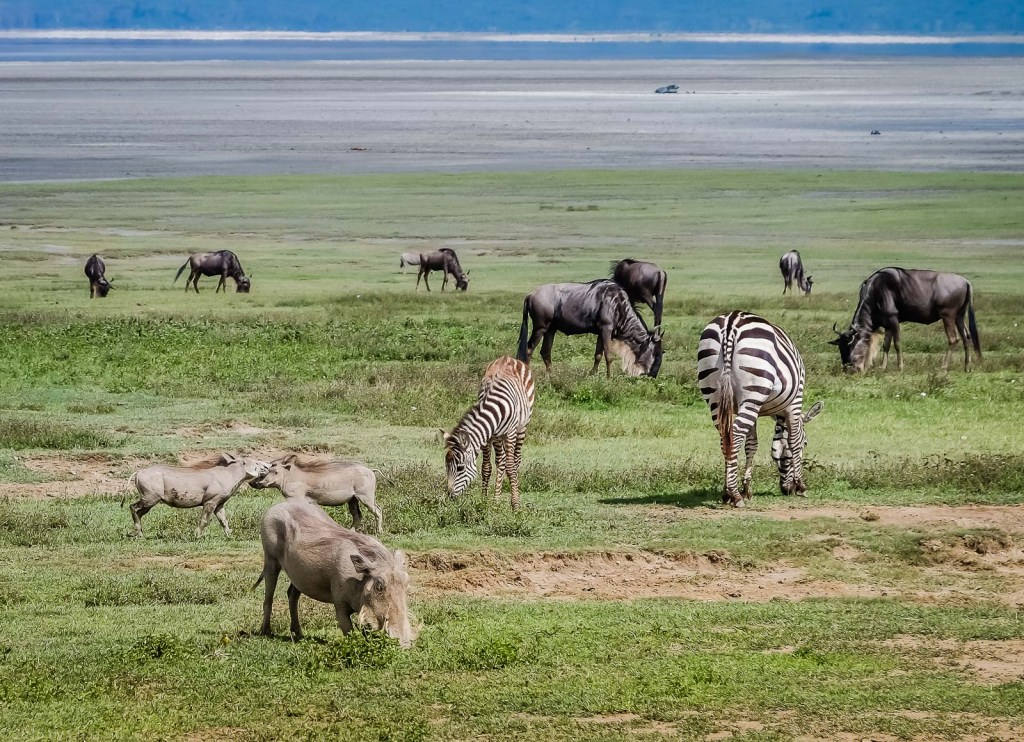 Ngorongoro Crater Diversity Is Everywhere