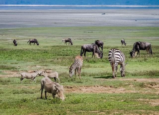 Ngorongoro Crater Diversity Is Everywhere