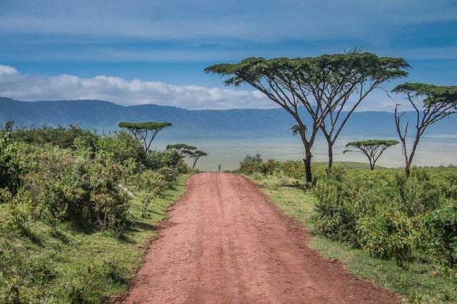 Umbrella Acacia Trees Along The Road Into The Crater