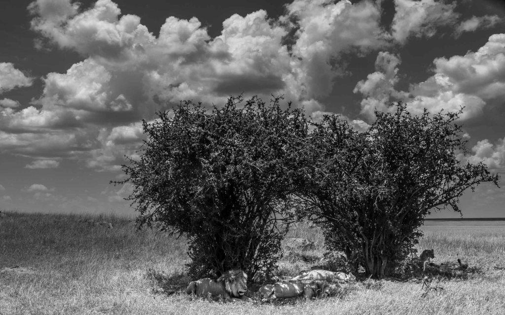 The Serengeti Pride - 2 Guys, 3 Girls.  It Probably Got Weird.