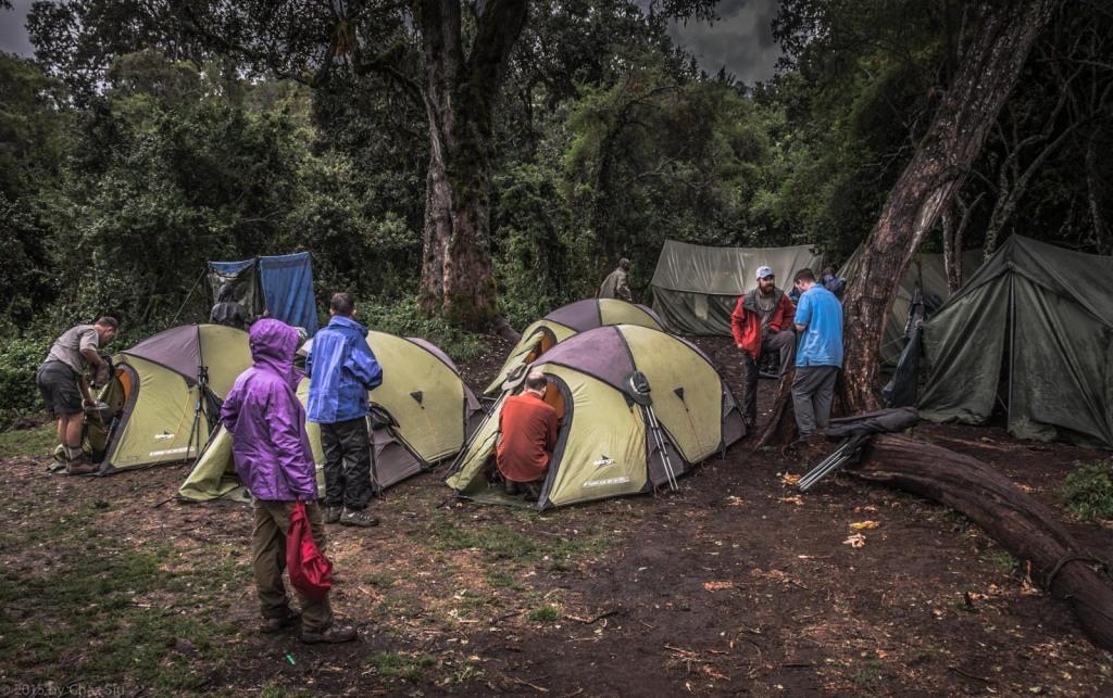 Tree Camp